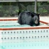 Hot Tub Bears All