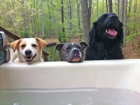 Cute Animals Hot Tubbing!