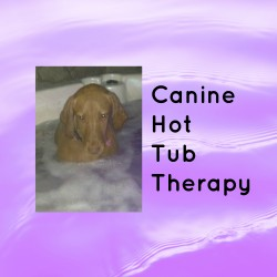 Canine Hot Tub Therapy