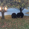 Bears Pester Daycare, Eat Hot Tub Covers